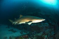 9 Mile Reef Advanced Dive