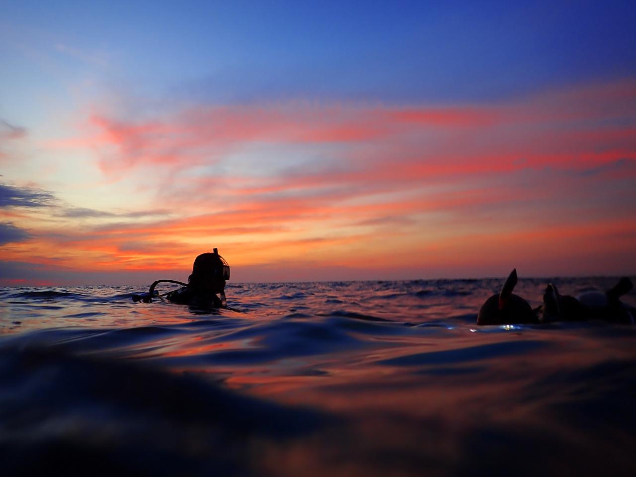 Night Dive Reef+Wreck Gold Coast