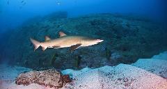 PADI Advanced Course - The Ultimate Shark Adventure