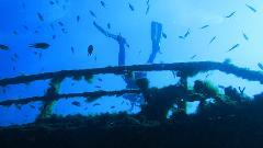 Advanced Deep (40m) Double Dive Gold Coast