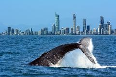 Gold Coast Whale Watch & Marine Research Adventure