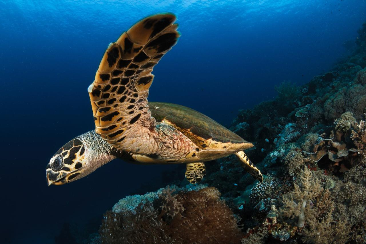 Gold Coast Reefs & Wrecks | Double Dive