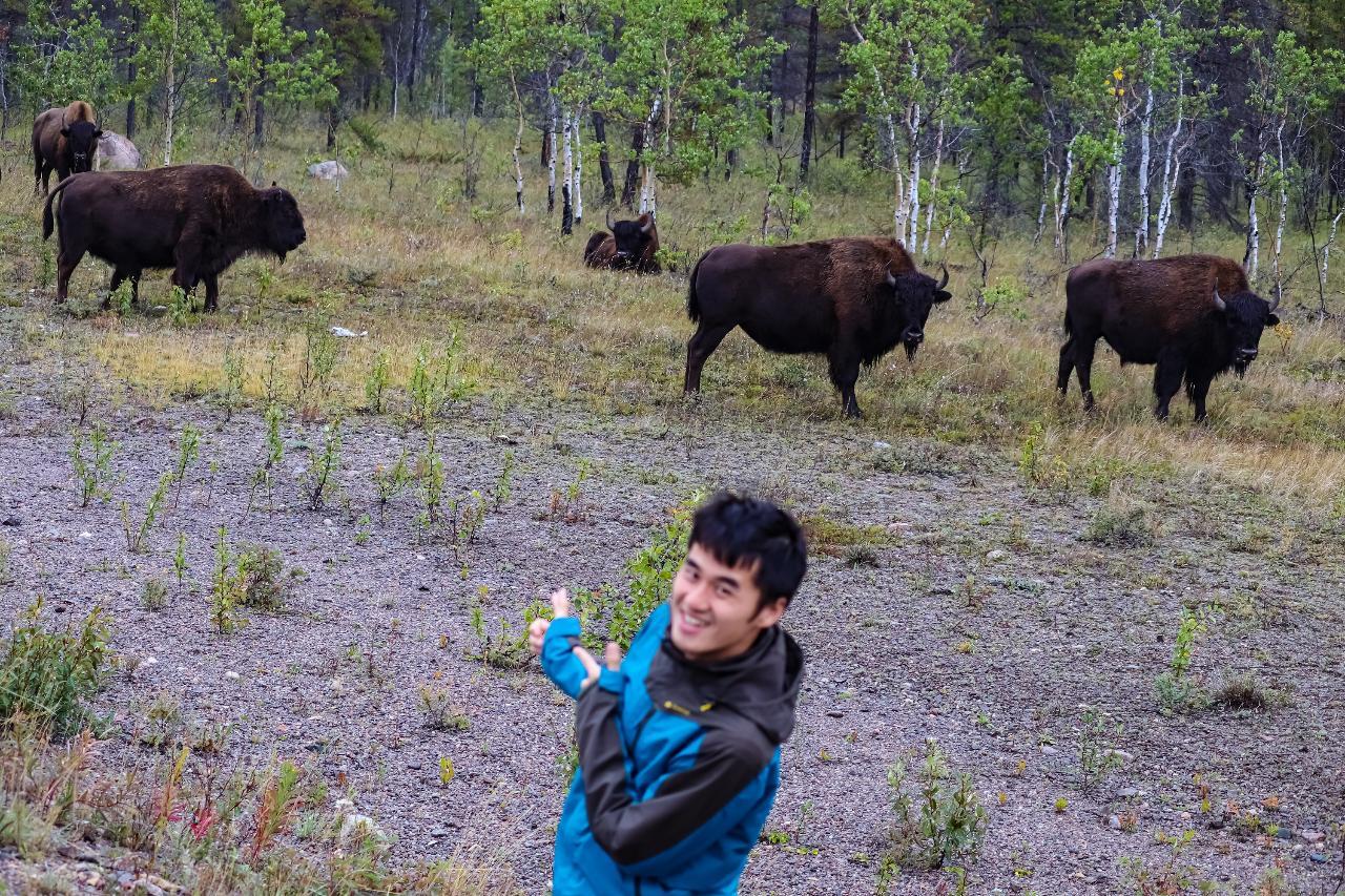 Wildlife Buffalo Tour
