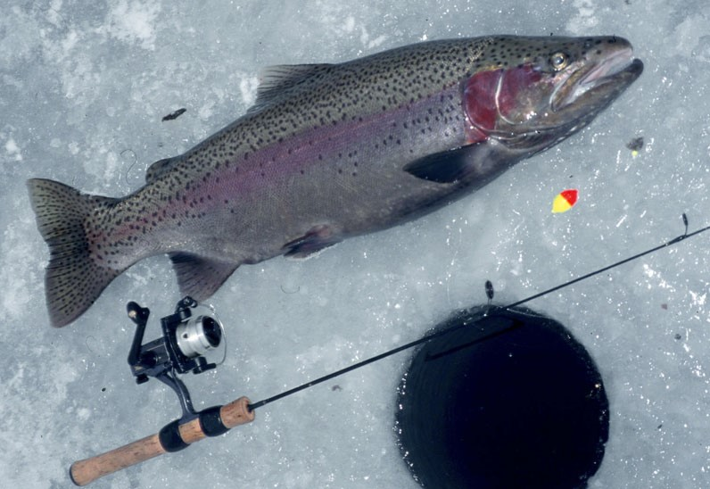Yellowknife winter holiday package arctic tours canada for Ice fishing trout lures