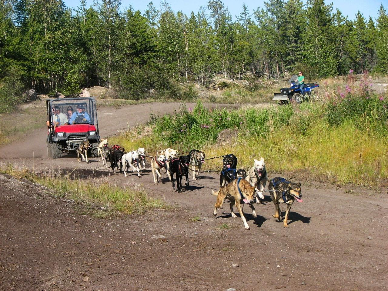 Dog Mushing on Wheels Experince