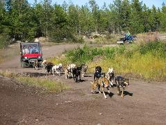 Dog Mushing on Wheels Experience