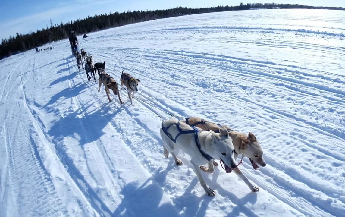 Yellowknife Dog Sledding Tours