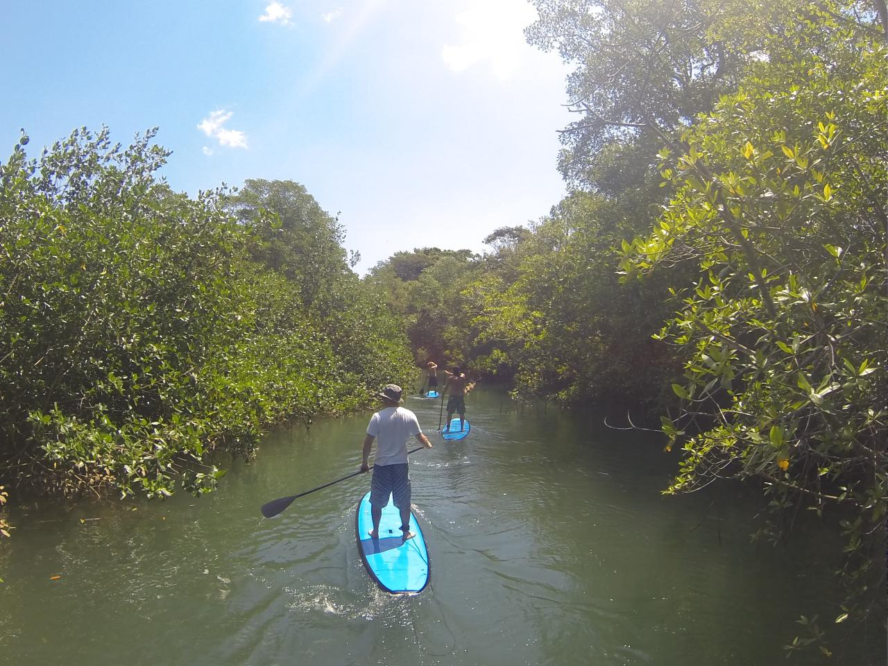 Jungle River Stand Up Paddle Tour
