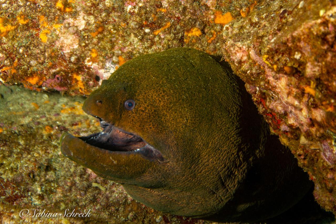 PADI Deep Dive Specialty