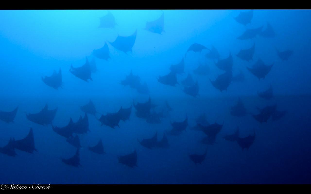 Contreras for 2 Fun Dives at Coiba National Park