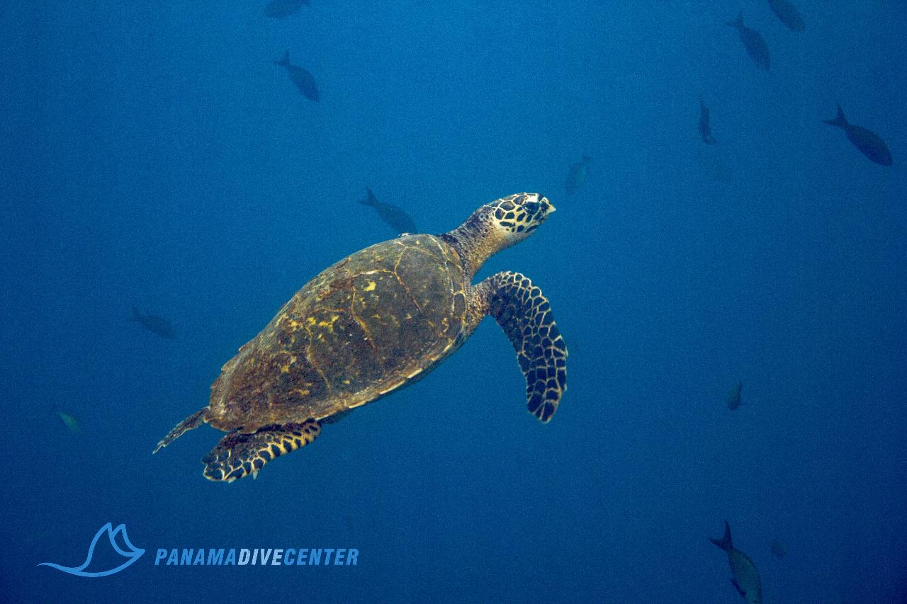 Package: 1 Day of Diving & 2 Nights in Santa Catalina