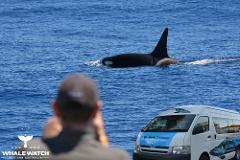 Bremer Canyon Orca Experience  + Perth Bus Transfers + Accommodation + 2 Day Tour