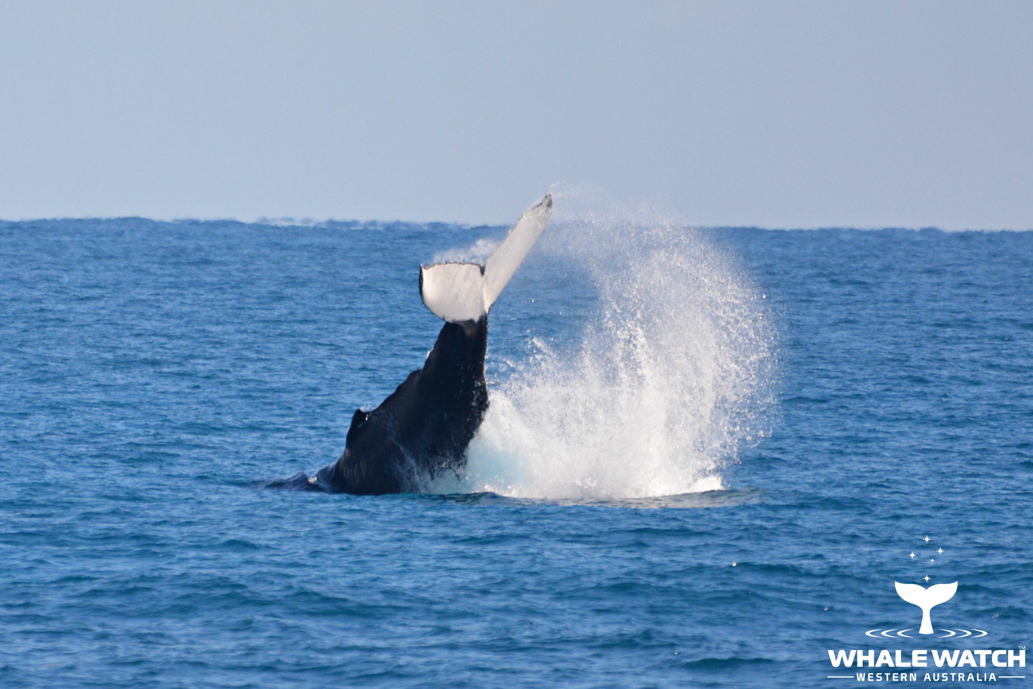 Whale Watch Experience ~ VIP Captains Lounge ~ PERTH