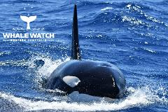 Bremer Canyon Orca Experience