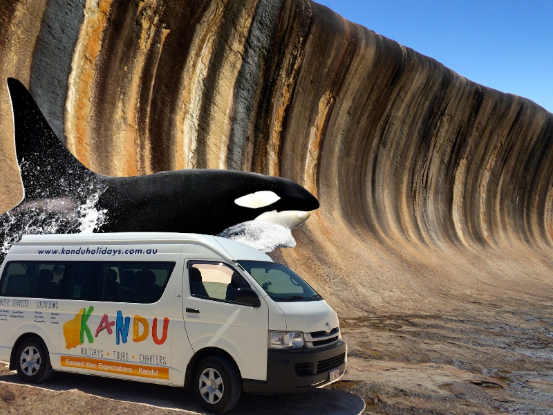 Bremer Canyon Orca Experience + Wave Rock + Perth Transfers