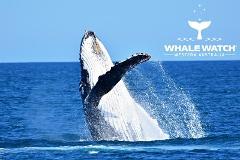 Whale Watch Experience ~ DUNSBOROUGH