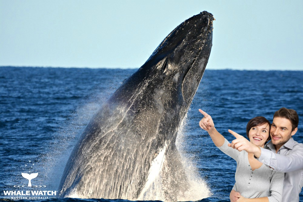 Whale Watch Experience ~ PERTH