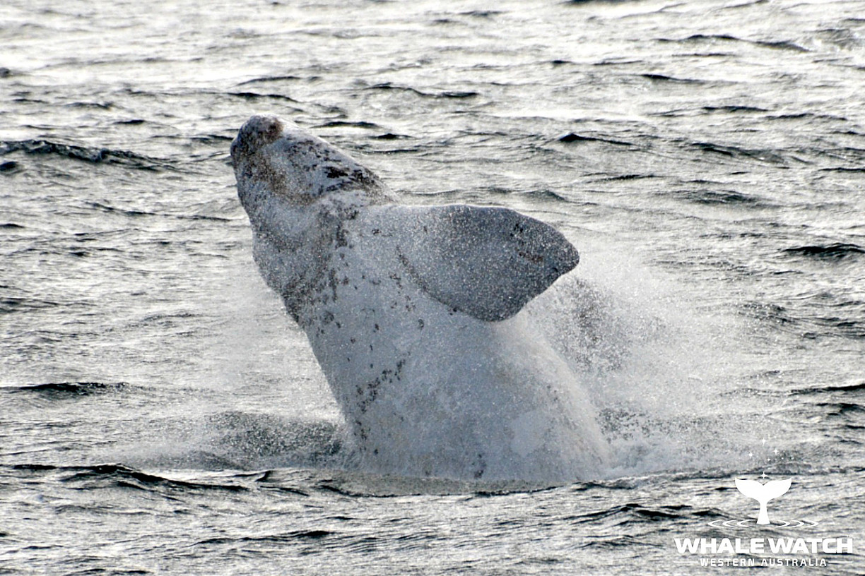 Whale Watch Experience ~ VIP Captains Lounge  ~ AUGUSTA