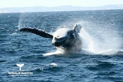 Whale Watch Experience ~ AUGUSTA