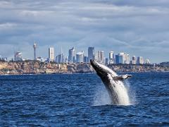 2.5 hr Sydney Adventure Whale Watching Experience (Premium)