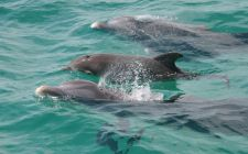 Shell Island Dolphin/Snorkel Boat Tour