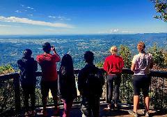 Springbrook Rainforest & Waterfalls Tour - Departing GOLD COAST