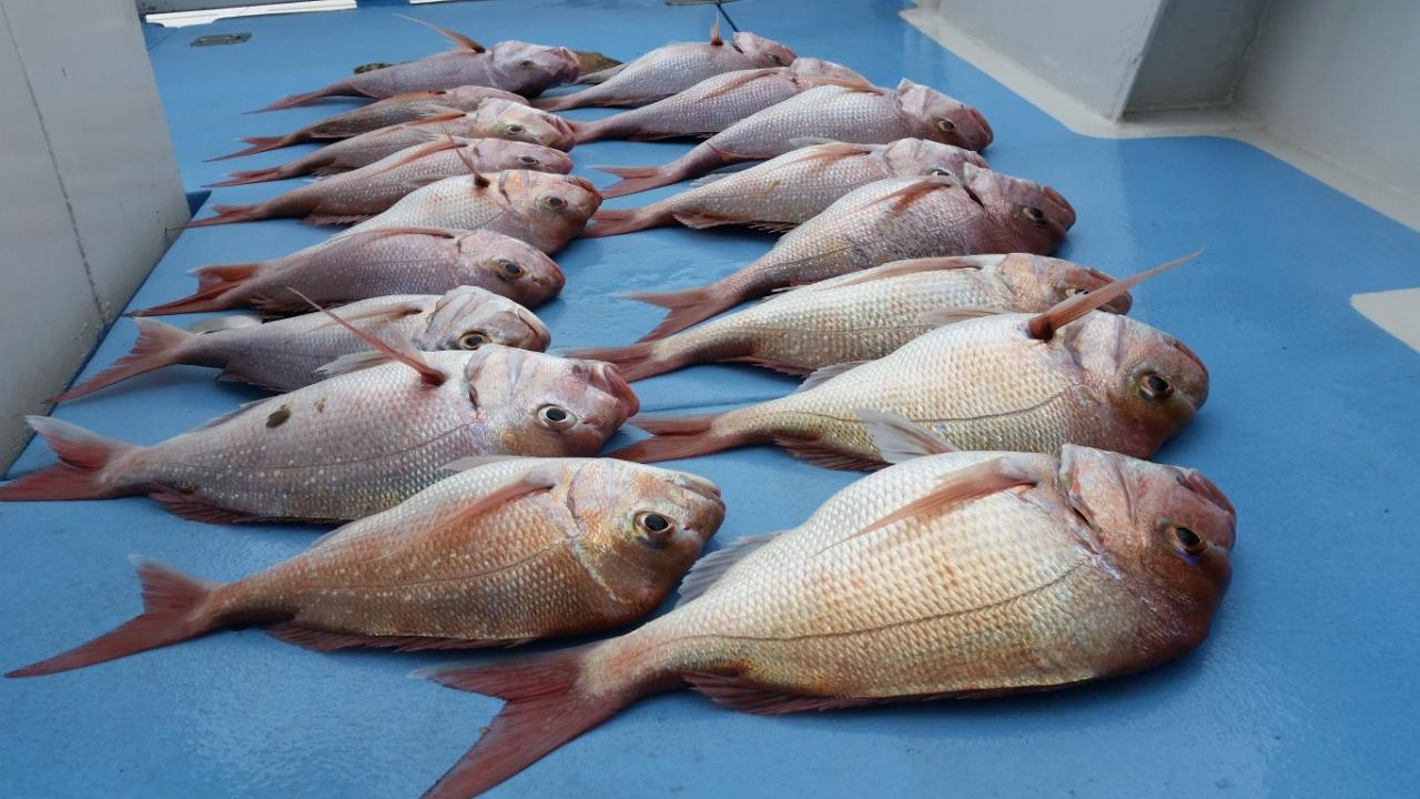 GIFT VOUCHER (BIGGEST FISH WINNER)