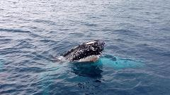 Busselton Whale Watching - 1.30pm