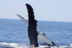 Augusta Whale Watching - 8am