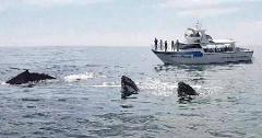 Busselton Whale Watching 1.30pm on board Dhu Force