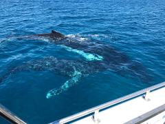 Busselton Whale Watching Voucher