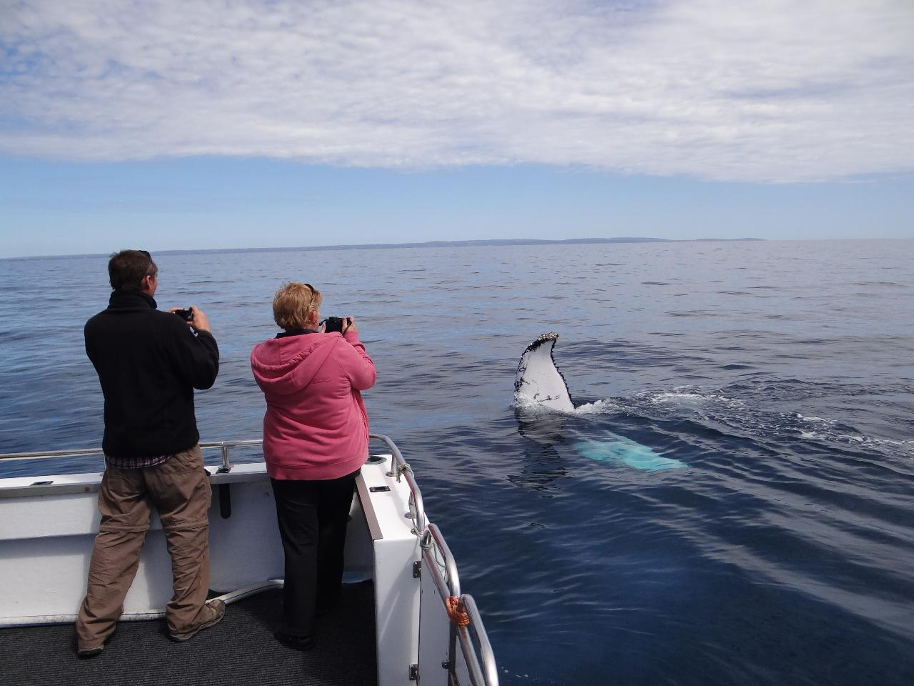 Busselton Whale Watching 10am on board Dhu Force
