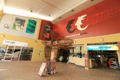 Crocosaurus Cove Entry