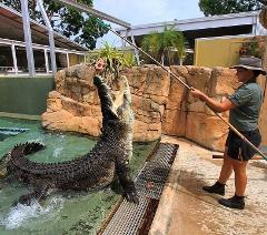 Croc N Cruise Explorer