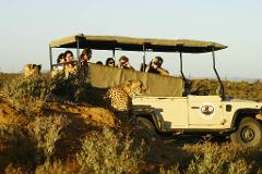 Big 5 Safari Day Tour from Cape Town  - Self Drive