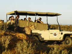 Big 5 Safari Day Tour from Cape Town