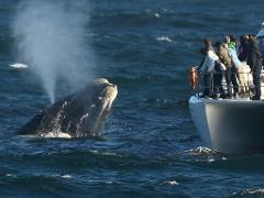 Hermanus Whale Route Tour (Small Group Tour)