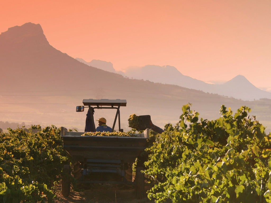 1-Day Winelands Tasting Tour (Small Group Tour)
