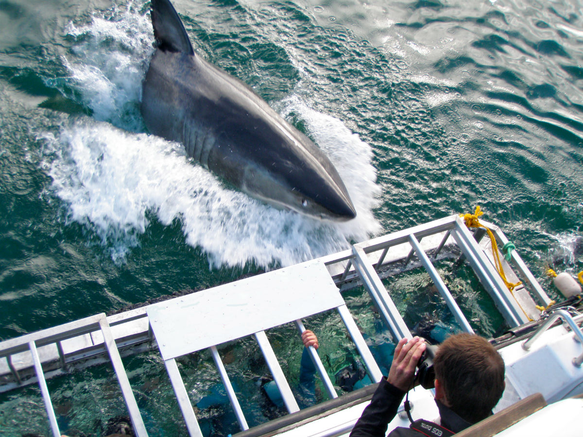 Shark Cage Diving In Gansbaai With Transfer