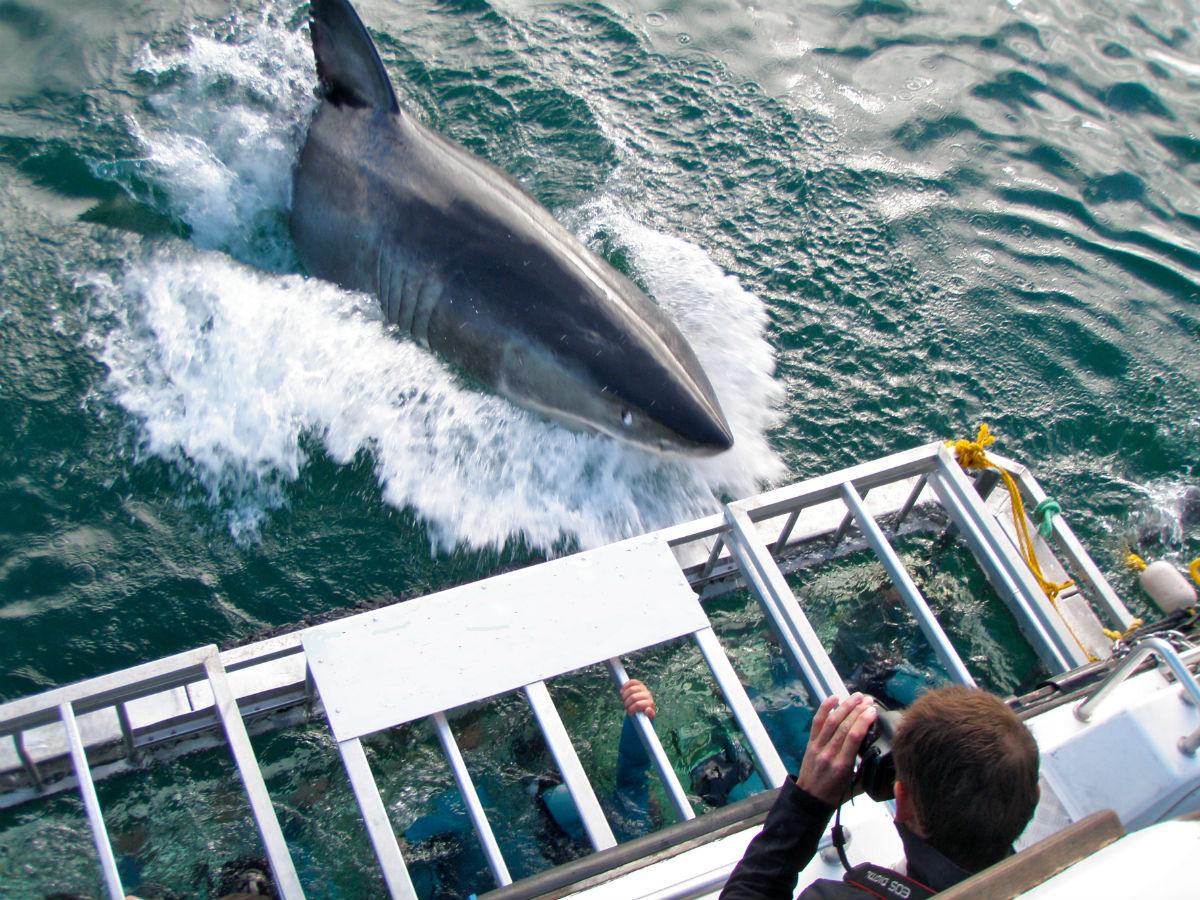 Shark Cage Diving In Simonstown - Falsebay With Transfer