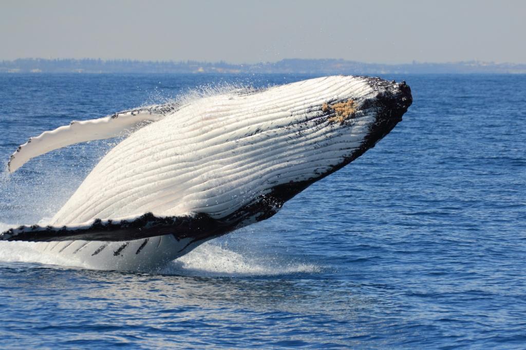 Whale Watching Cruise Midweek (Morning)
