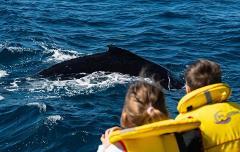 Gift Voucher Whale Watching (child 12-17 yrs)