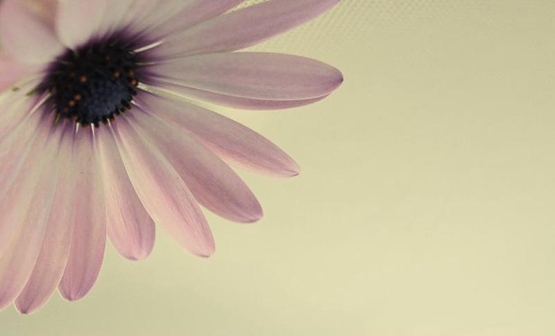 Digital Photography Course - 8 week - Alexandria
