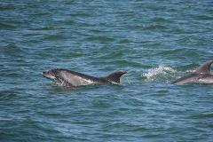 2 Hour Private Family Boat  Dolphin and Wildlife Tour