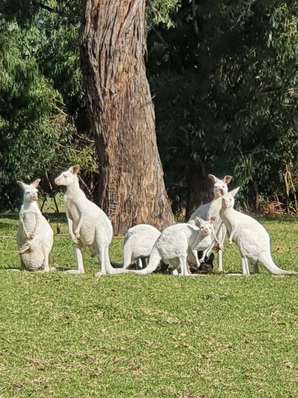 E-Tour: Annemaree's farm animals
