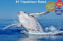 Dunsborough Whale Watching  9:45 or 1:15