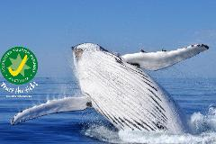 Busselton Whale Watching