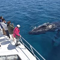 Whale Watching Busselton