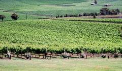 Yarra Valley Wine Tasting $77