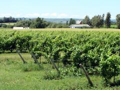 Wine Tasting at Georgian Hills Vineyards